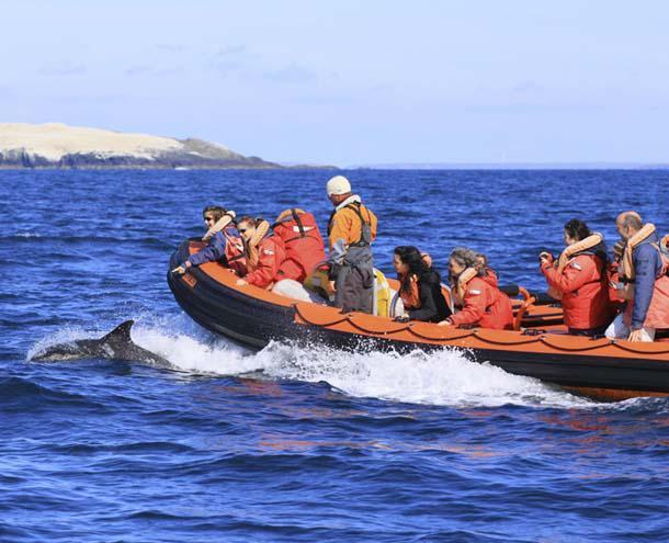 Wildlife boat trip