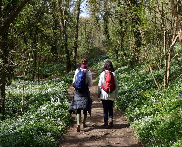 Woodland walks