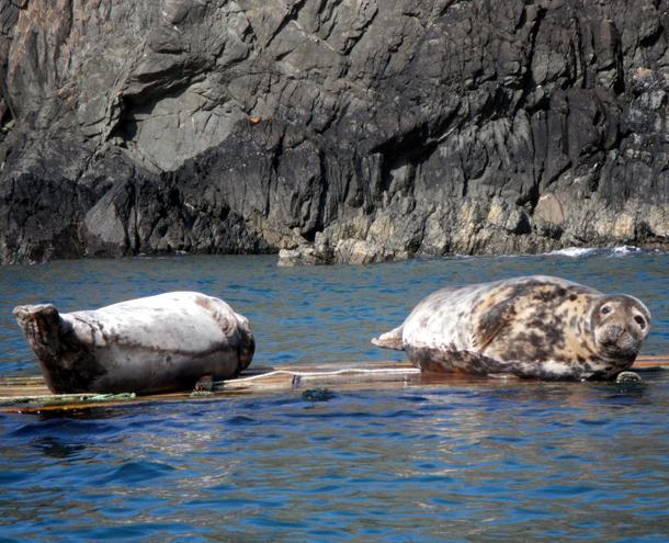 Fall seal spotting